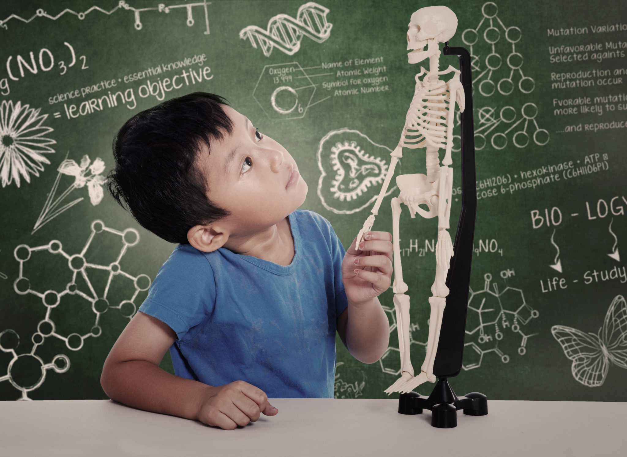 Anatomy Lessons for your Child
